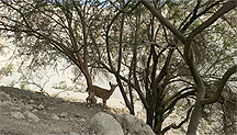 Национальный парк Эйн Геди